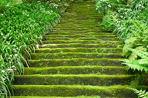 苔の寺。妙法寺