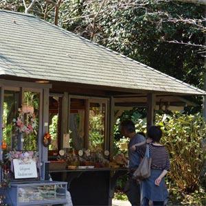 浄妙寺 お寺カフェ