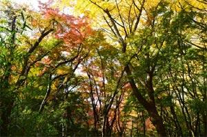 鎌倉の隠れた紅葉の名所。獅子舞