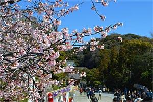 春の八幡宮