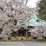 材木座の隠れた桜の名所。光明寺