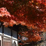 紅葉 円覚寺