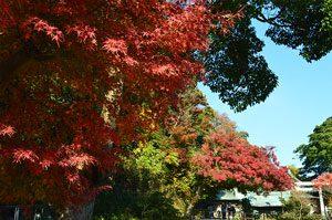 紅葉の鎌倉宮