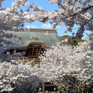 春の建長寺