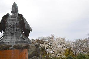 源氏山 桜