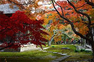 紅葉 長寿院
