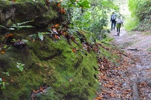 鎌倉のハイキングコース