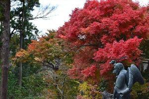 鎌倉の紅葉の穴場