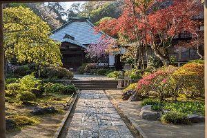 海蔵寺。美しき鎌倉奥座敷の花の寺